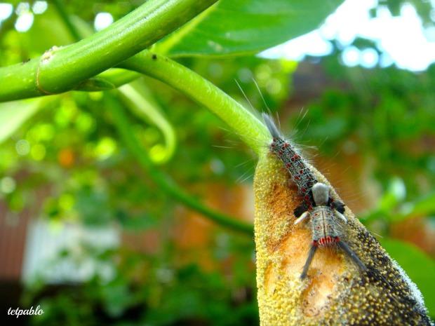 litterthoughts/caterpillar